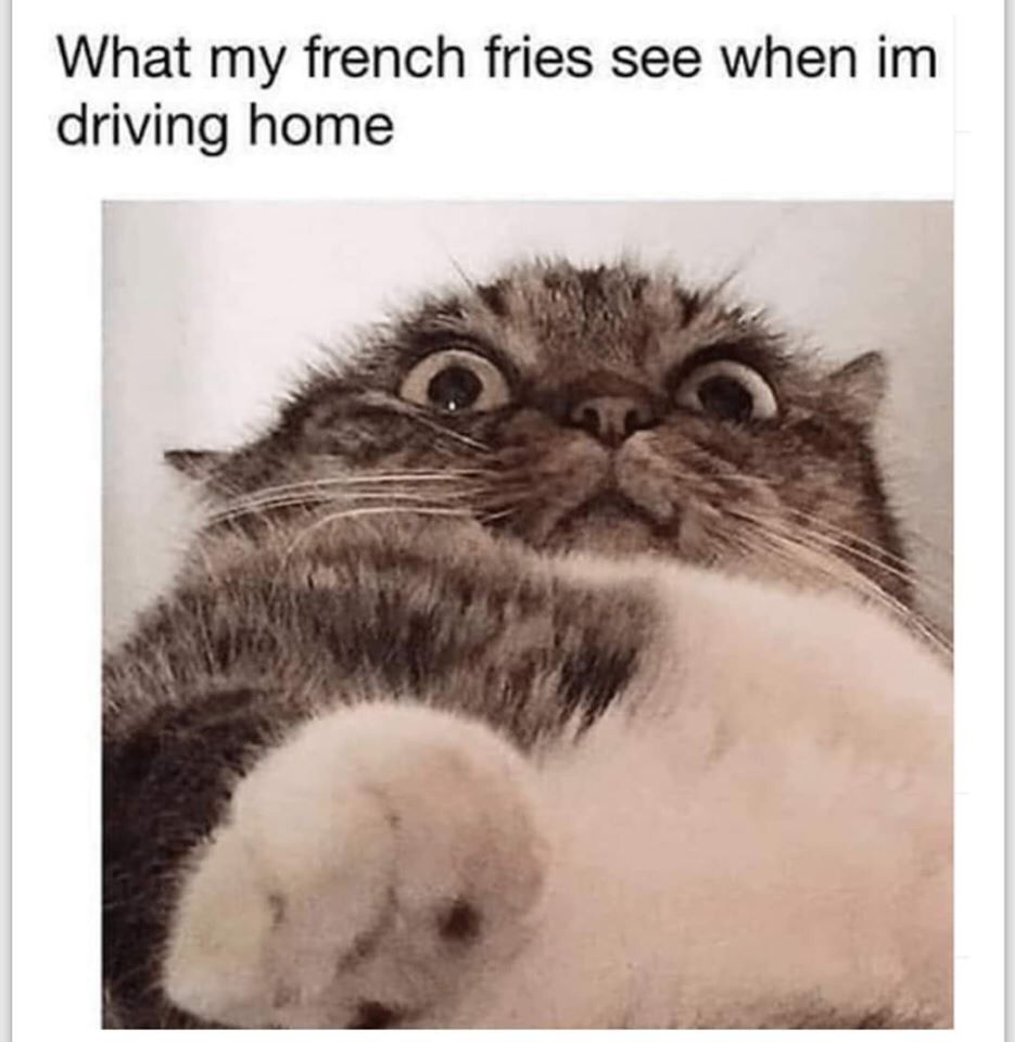 Collection Of Funny Cat Memes 2019 Funny Cat Memes Funny Animal Memes Very Funny Pictures