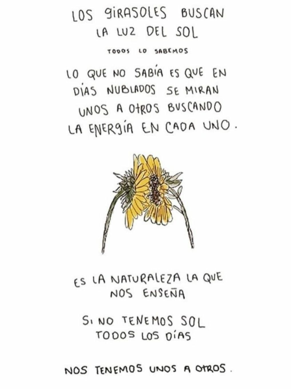 El Verdadero Significado De Un Girasol Frases Quotes Spanish