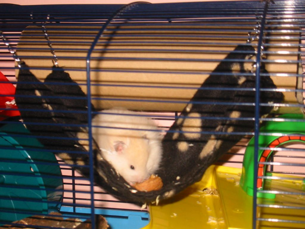 Various Homemade Hamster Accessories Hamster Toys Syrian Hamster Toys Hamster Accessories