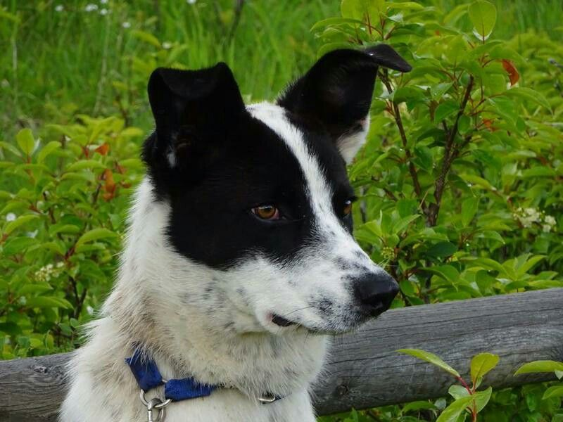 "Pin on My Childhood Dog... 'NIP' ""NIP PATCHES O'REILLY"""