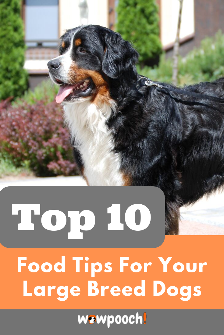 Some Common Questions Are Usually Asked By Large Breed Dog Owners How Large Breed Dog Foods Are Diff Dog Food Recipes Best Dog Food Large Breed Dog Food