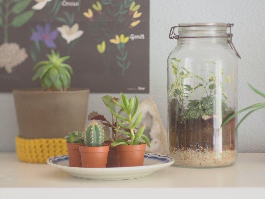 DIY : comment faire un terrarium soi-même ?