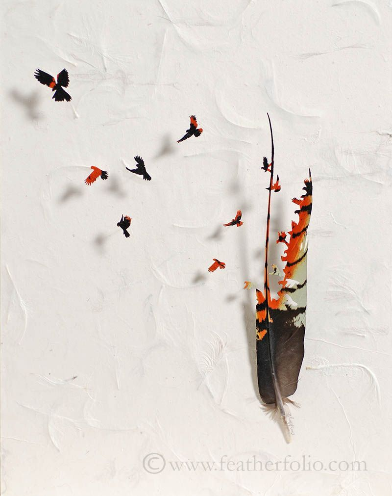 Chris Maynard, Lively Birds Carved Out of Natural Feathers, USA, 2012