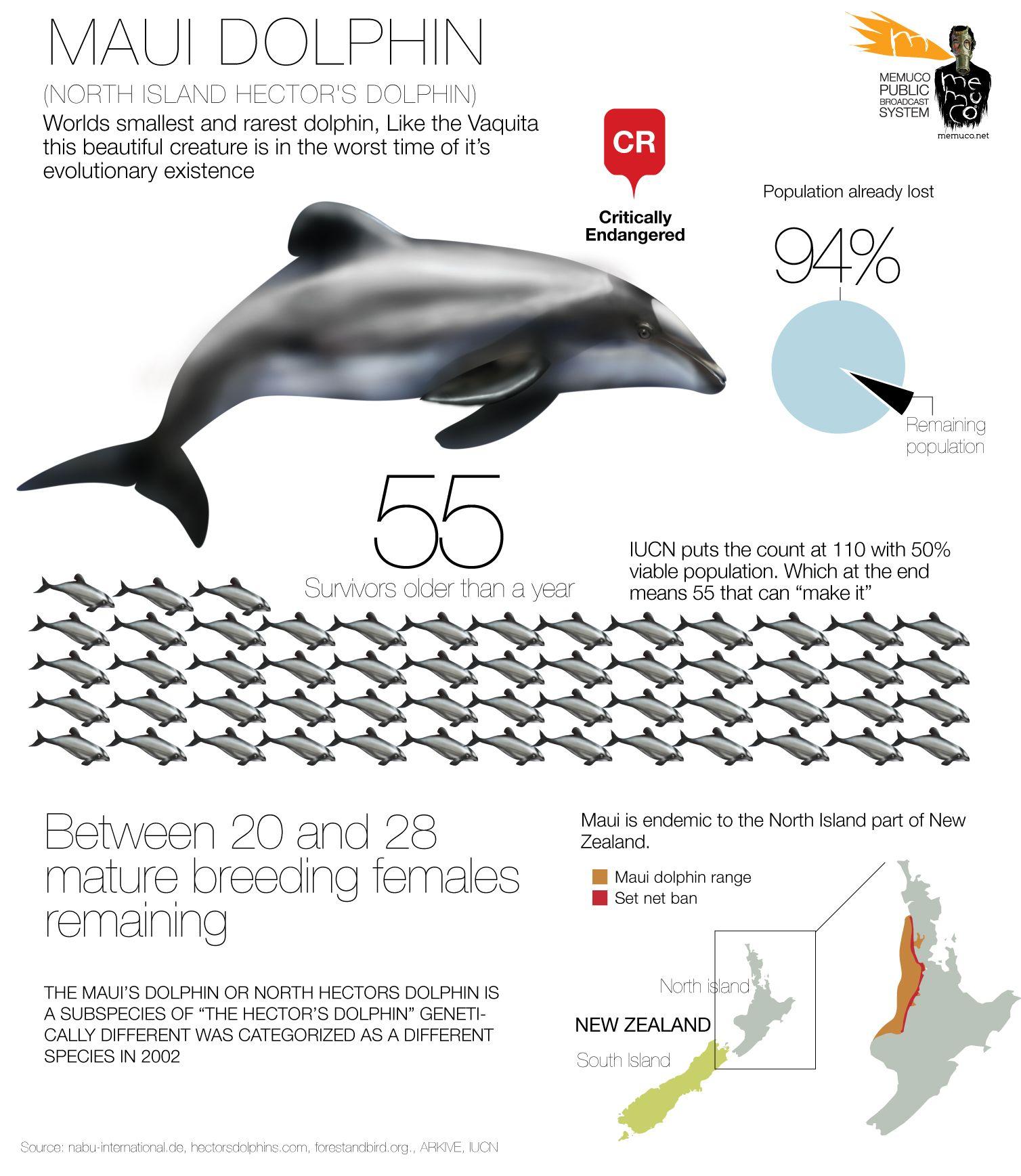 maui dolphin wildlife pinterest