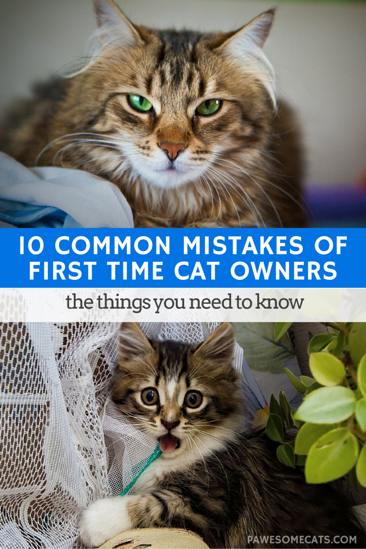 10 Common Mistakes of First Time Cat Owners First time