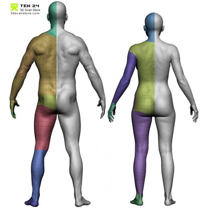 Male And Female Base Mesh Bundle Body Anatomy Anatomy Reference Body Scanning