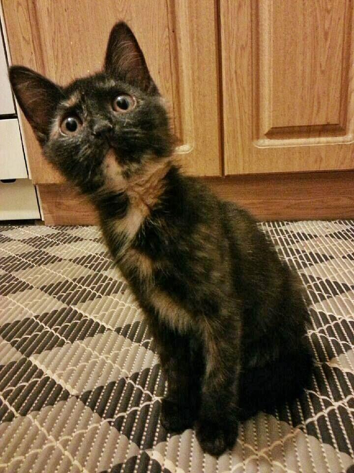 котёнка Busybackson