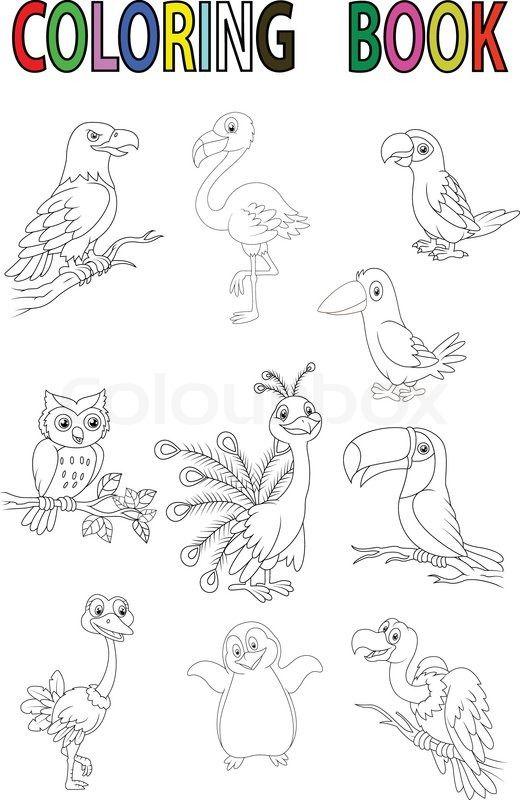 Vector illustration of Cartoon bird coloring book stock vector on ...