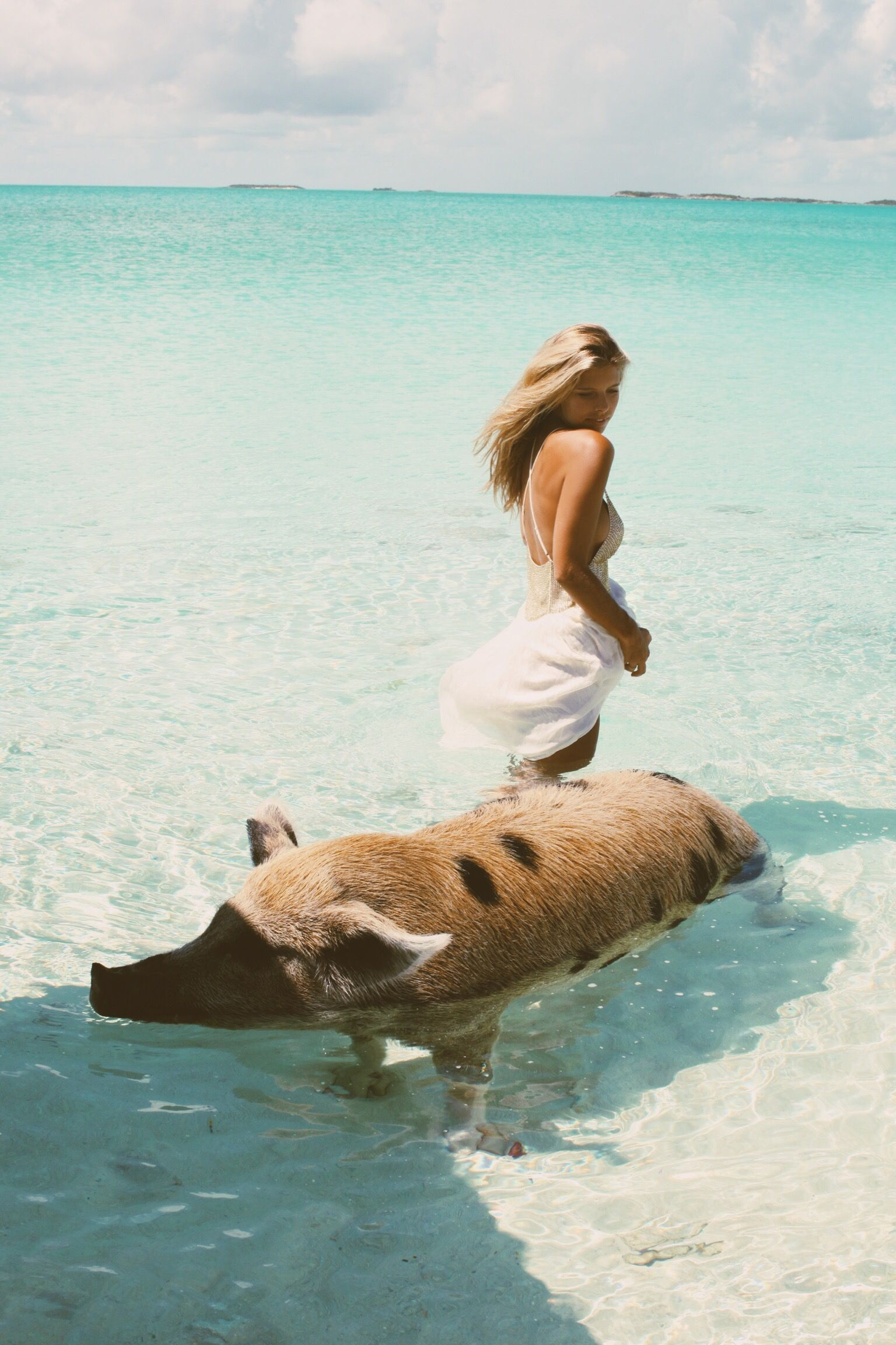 who would know a hairy pig would steal the show over a pretty model? He sure is a good swimmer :)