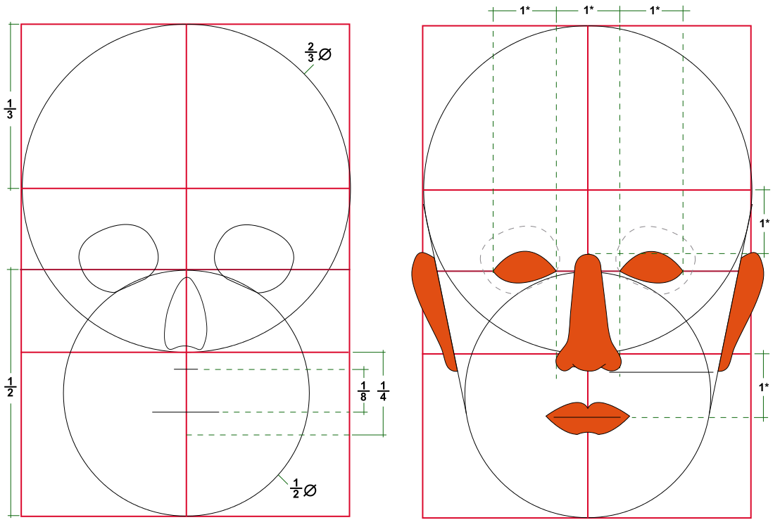 Human head proportions - Körperproportion – Wikipedia | золотое ...