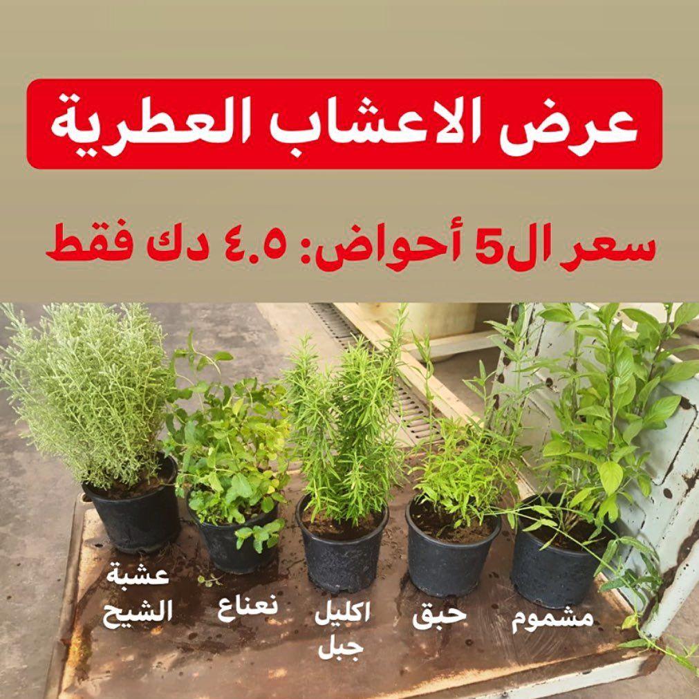 عرض الأعشاب العطرية 5 أحواض نباتات خارجية صالحة للأكل اكليل جبل روزماري نعناع حبق مشموم عشبة الشيح ب د Trending Decor Big Houses Plants