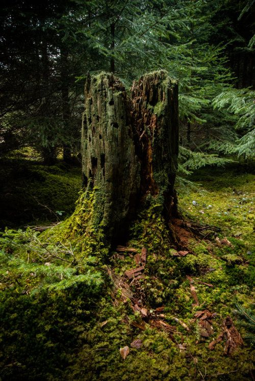 A kingdom unto itself, this stump with moss grows quiet.