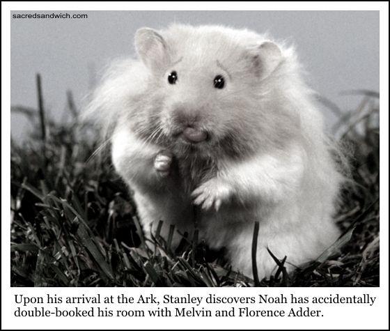 Return Of The Memes! Hamster, Cute hamsters