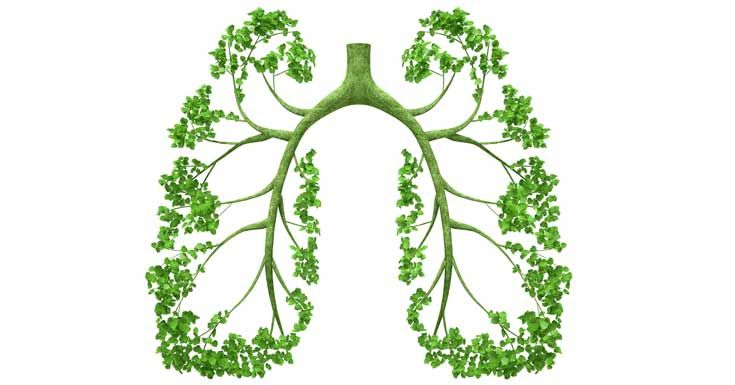Herbs to Cleanse Your Lungs to Breath Easily