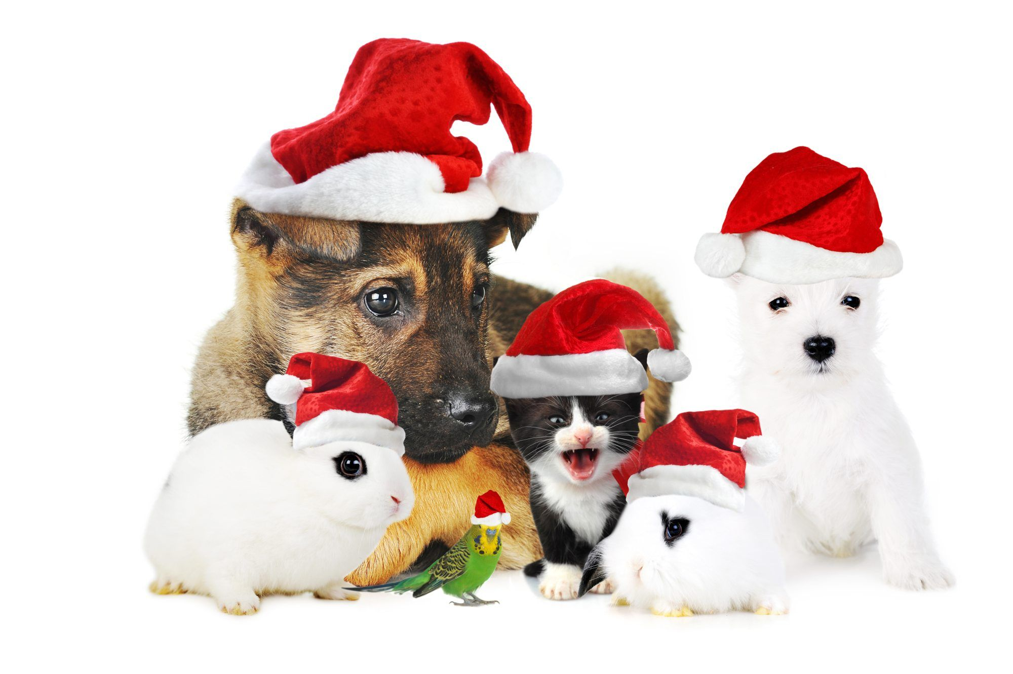 We Wish You, Your Family, and Pets a Very, Merry Christmas
