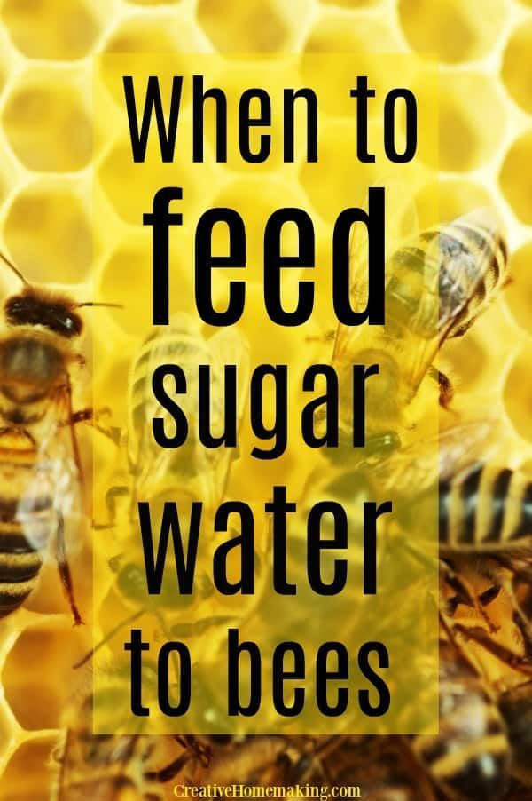 Is It Okay To Feed Your Bees Sugar Water Find Out When How And Why To Feed Your Honey Bees Sugar Water To Boost The Bee Food Honey Bees Keeping Feeding