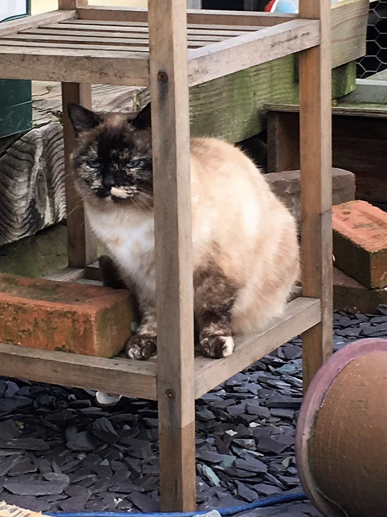 8 Catrageous Ways Your Cat Can Enjoy The Outdoors Safely Cat Patio Outdoor Cat Enclosure Outdoor Cats