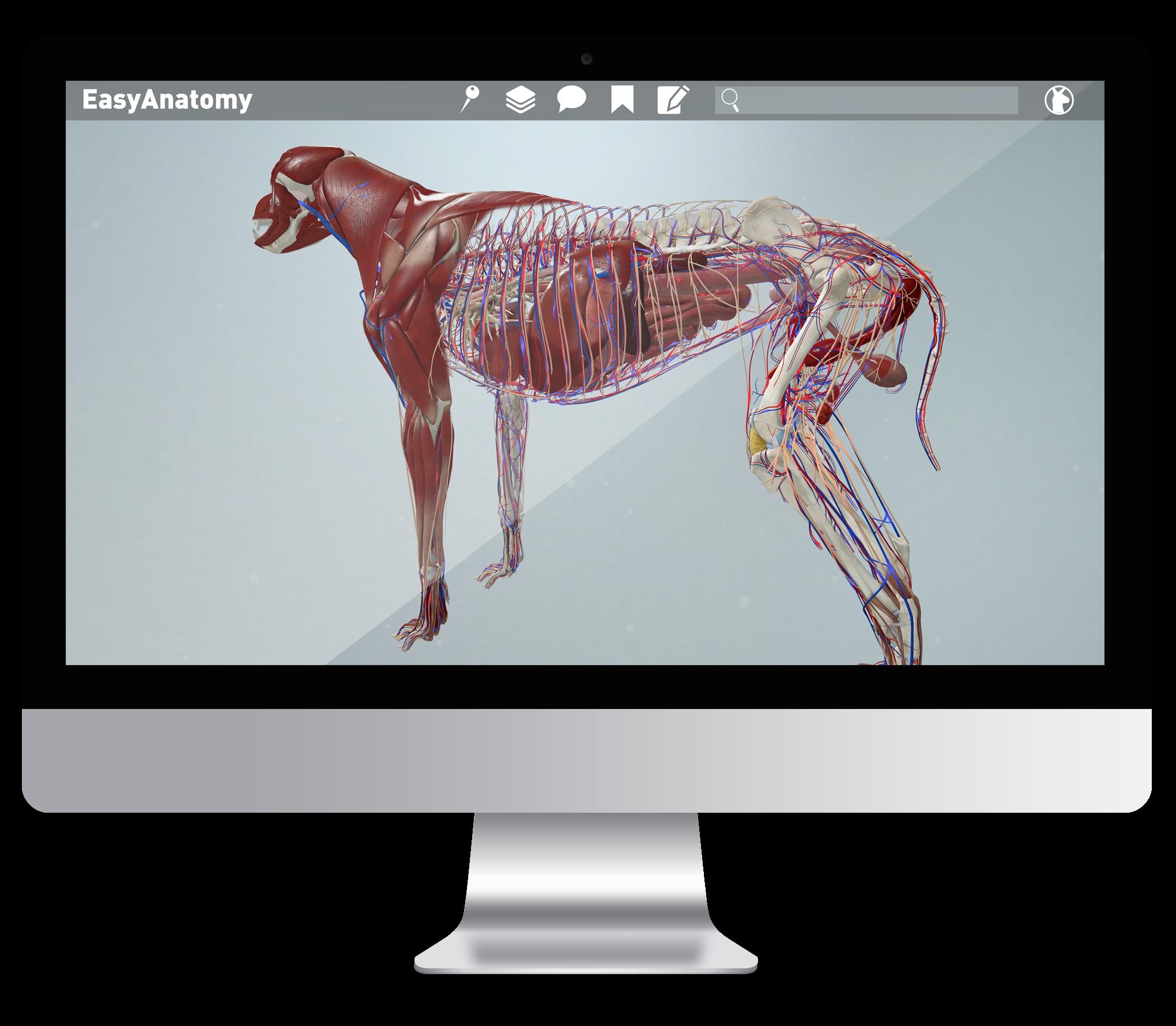 EasyAnatomy is an interactive, virtual 3D canine anatomy study app ...