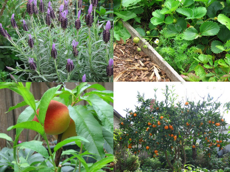 Deep green permaculture blog angelo eliades has a for Jardin 150m2
