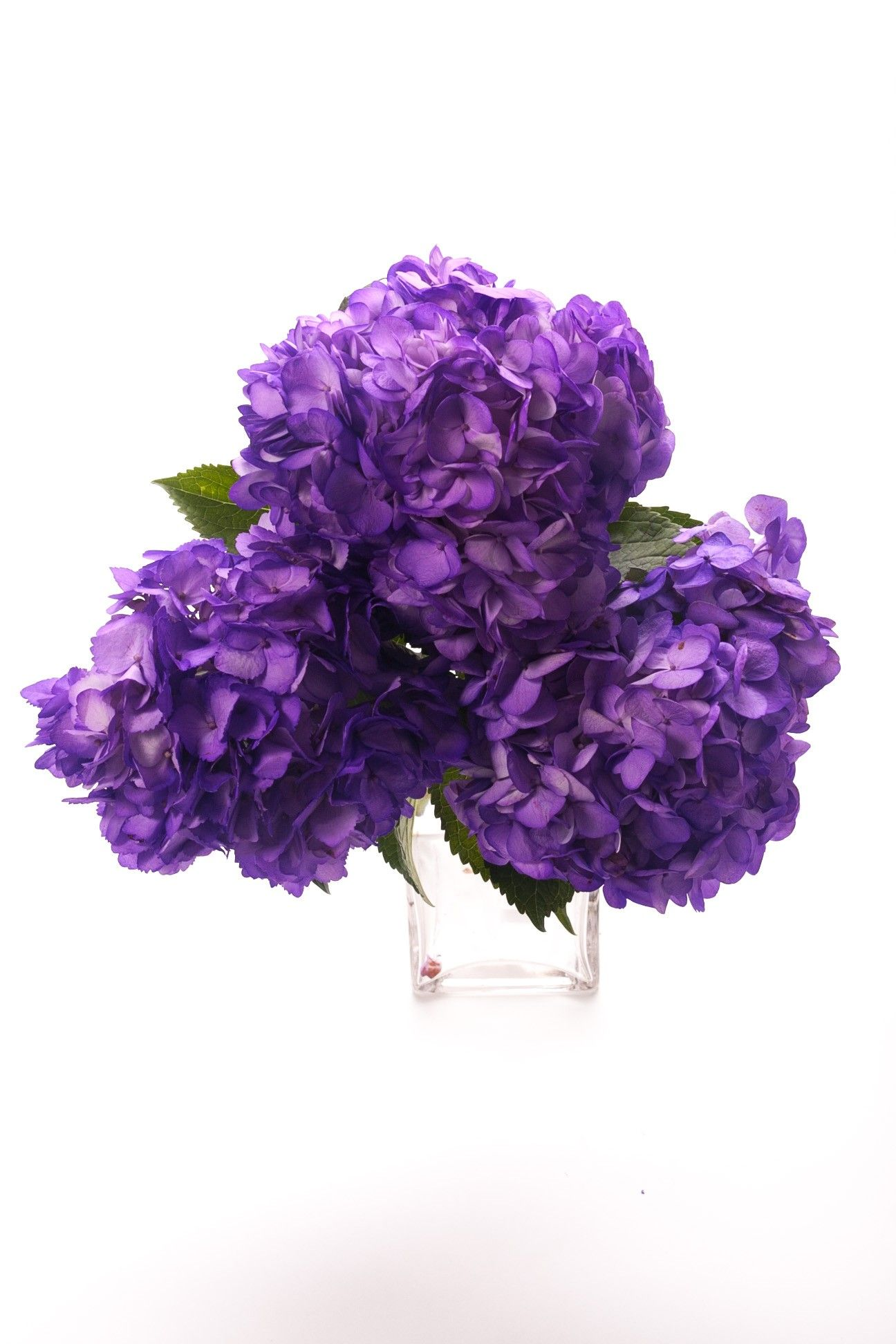 Types of Purple Flowers Delivery available from Nov 5