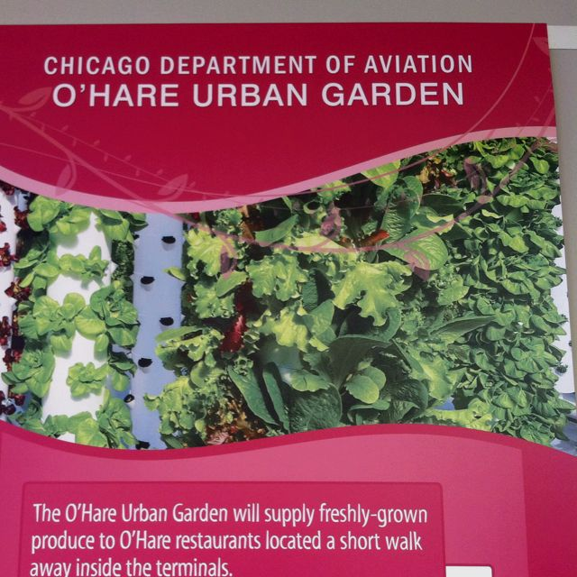 O'Hare Airport Urban Garden- Way To Go Chicago!! (With