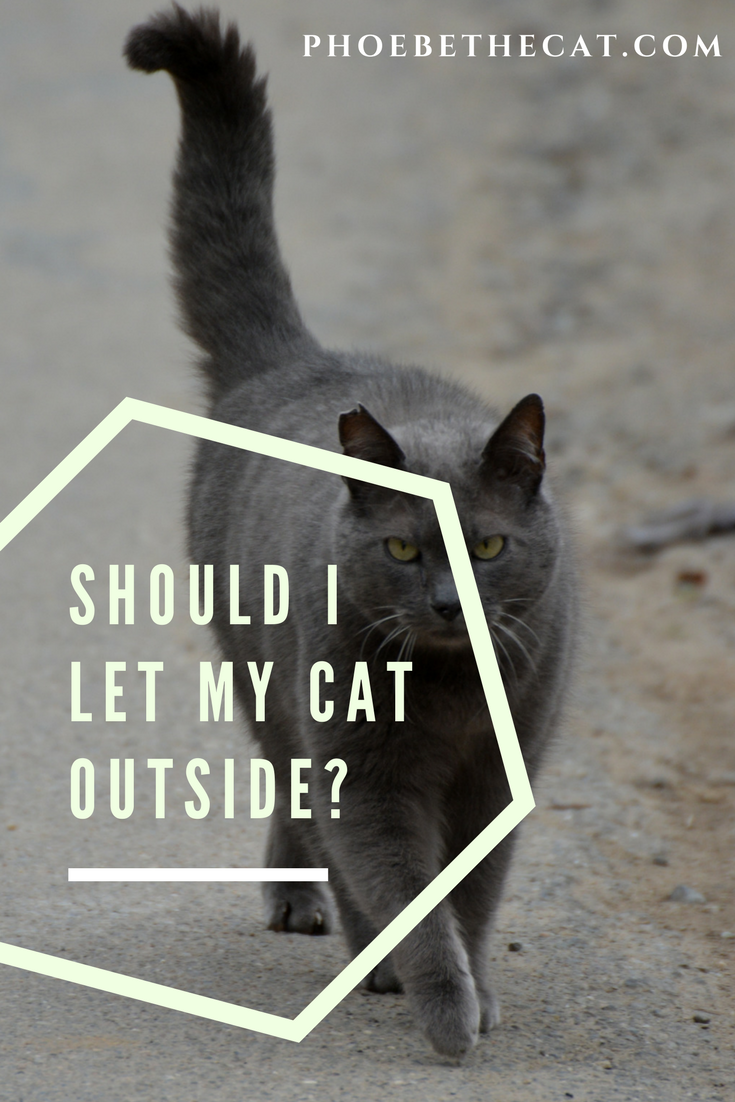 See This Blog Post At Http Phoebethecat Com Should I Let My Cat Outside Cats Outside Cats Indoor Cat