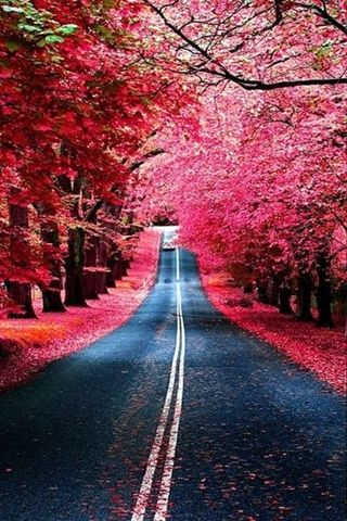 Most Beautiful Scenery Pink River Pink Road Best Android Wallpaper Best Android Themes And Background Amazing Nature Photography Nature Beautiful Nature