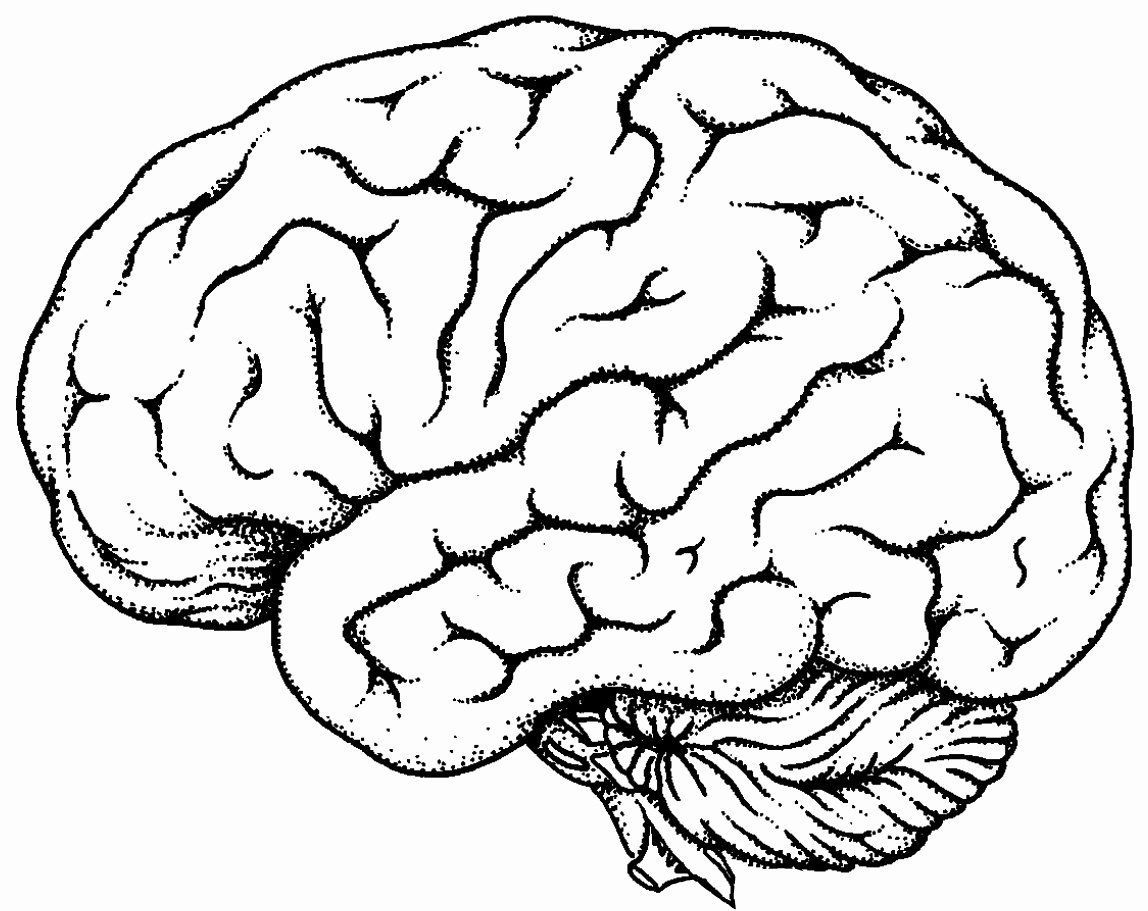 Human Brain Coloring Book Lovely Brain Line Drawing Clipart Best Brain Drawing Brain Diagram Human Brain
