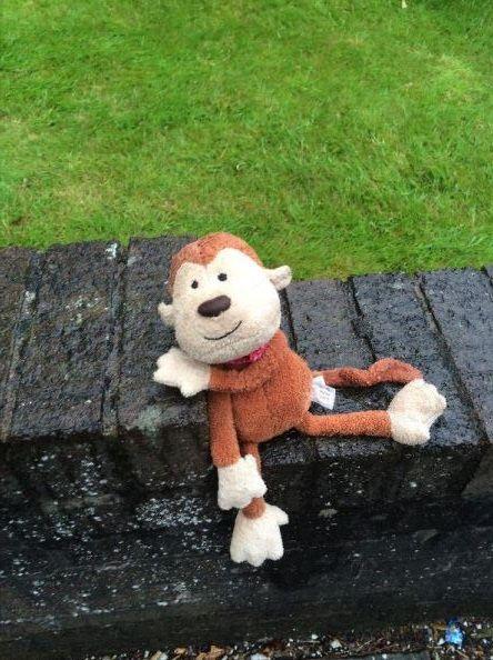 Hello I found this guy in the rain yesterday on Preston