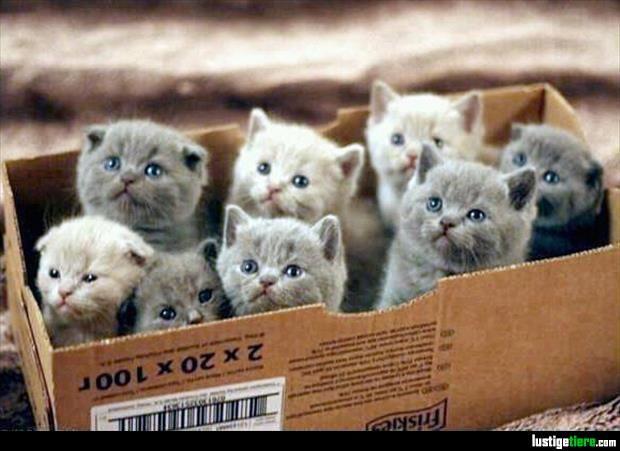 Niedliche Kätzchen in der Box