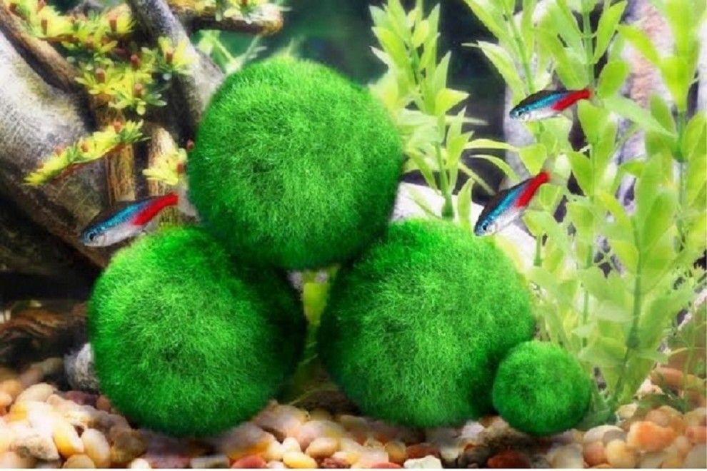 Here S What People Are Buying On Amazon Right Now Marimo Moss