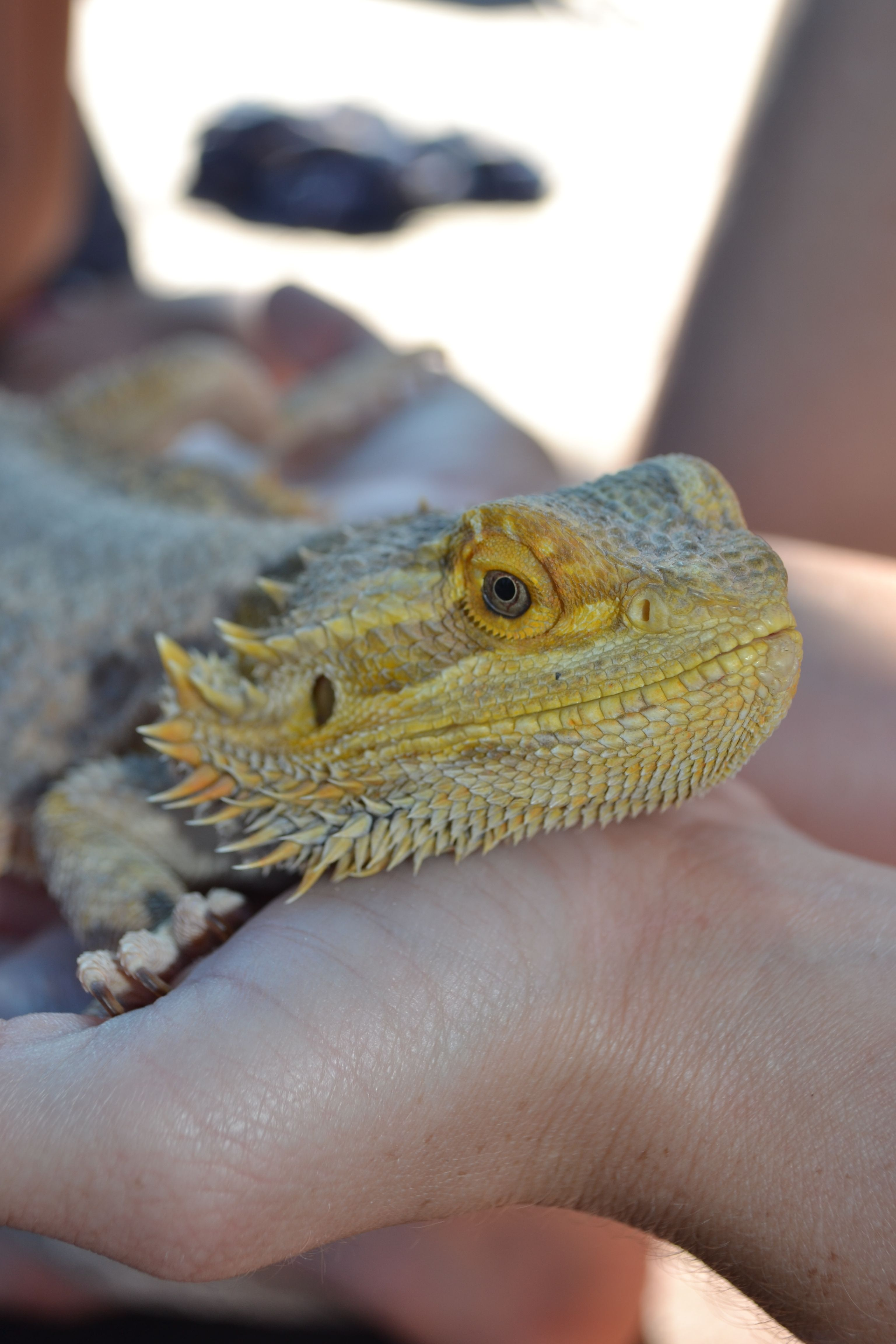 Reptile Show With Images