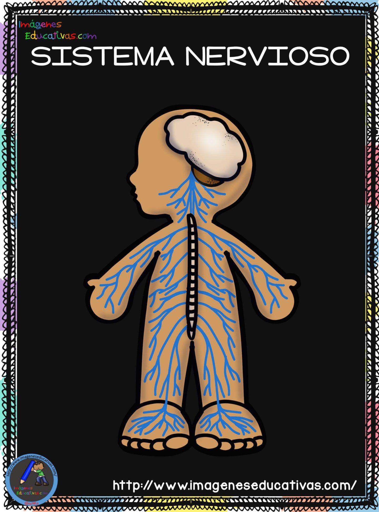 Cuaderno del Cuerpo Humano; Aparatos y Sistemas para trabajar en Primaria | Cuerpo  humano para niños, Sistemas del cuerpo humano, Cuerpo humano