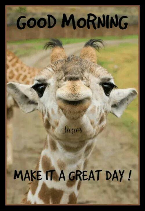 Pin by Sarjit on Good Morning & Quotes ☕   Good morning, Good