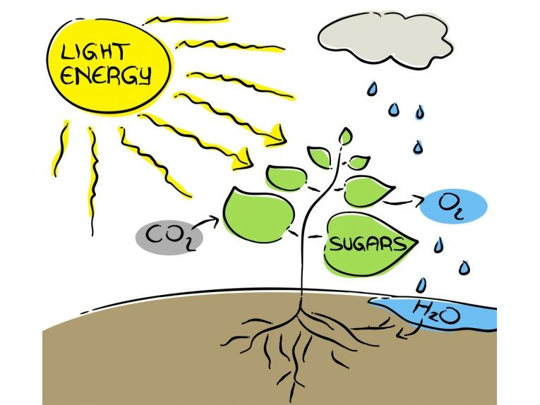 Stuff about photosynthesis voice synthesis windows