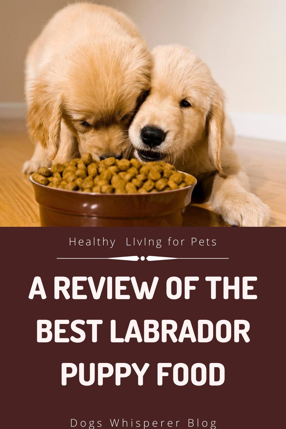 A Puppy Food Review Puppy Food Reviews Best Puppy Food Puppies
