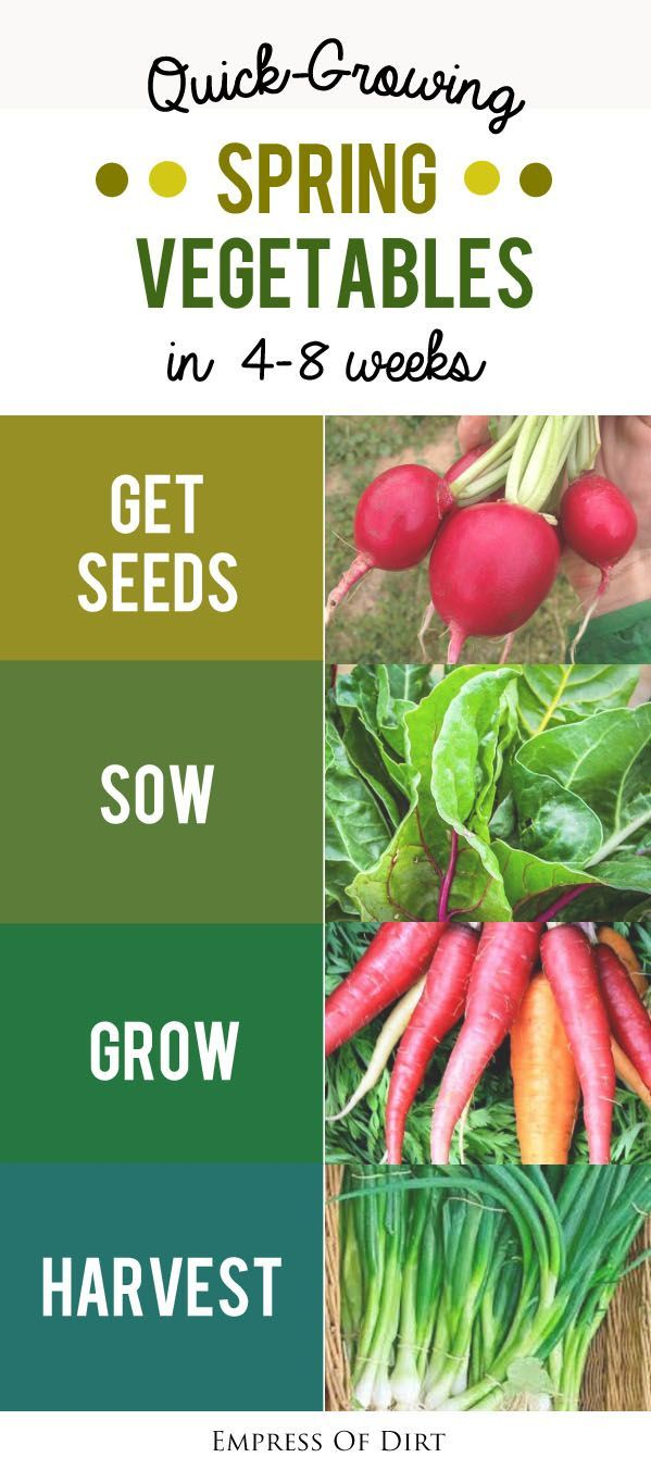 These Quick Growing Veggies Do Best In Cool Weather During 400 x 300