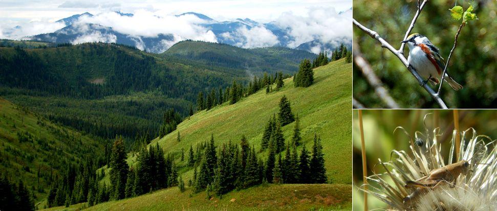 Environmental Consultants Calgary and Western Canada