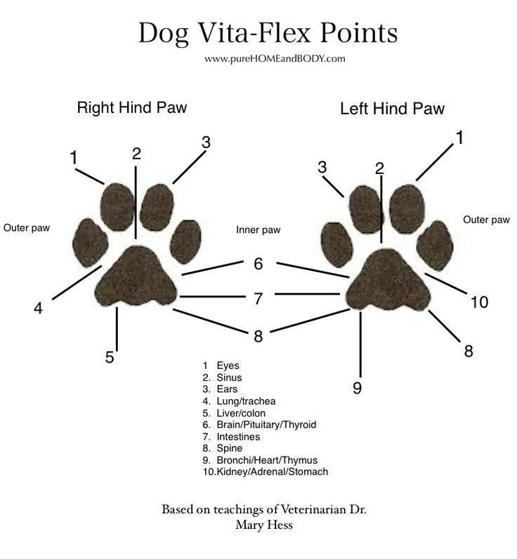 Dog Foot Diagram - Product Wiring Diagrams •