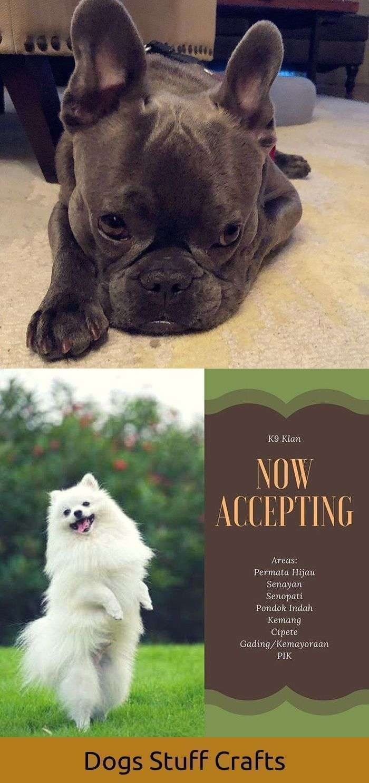 Dogs Vomiting Bile For Da Fur Babies Da Parental Units
