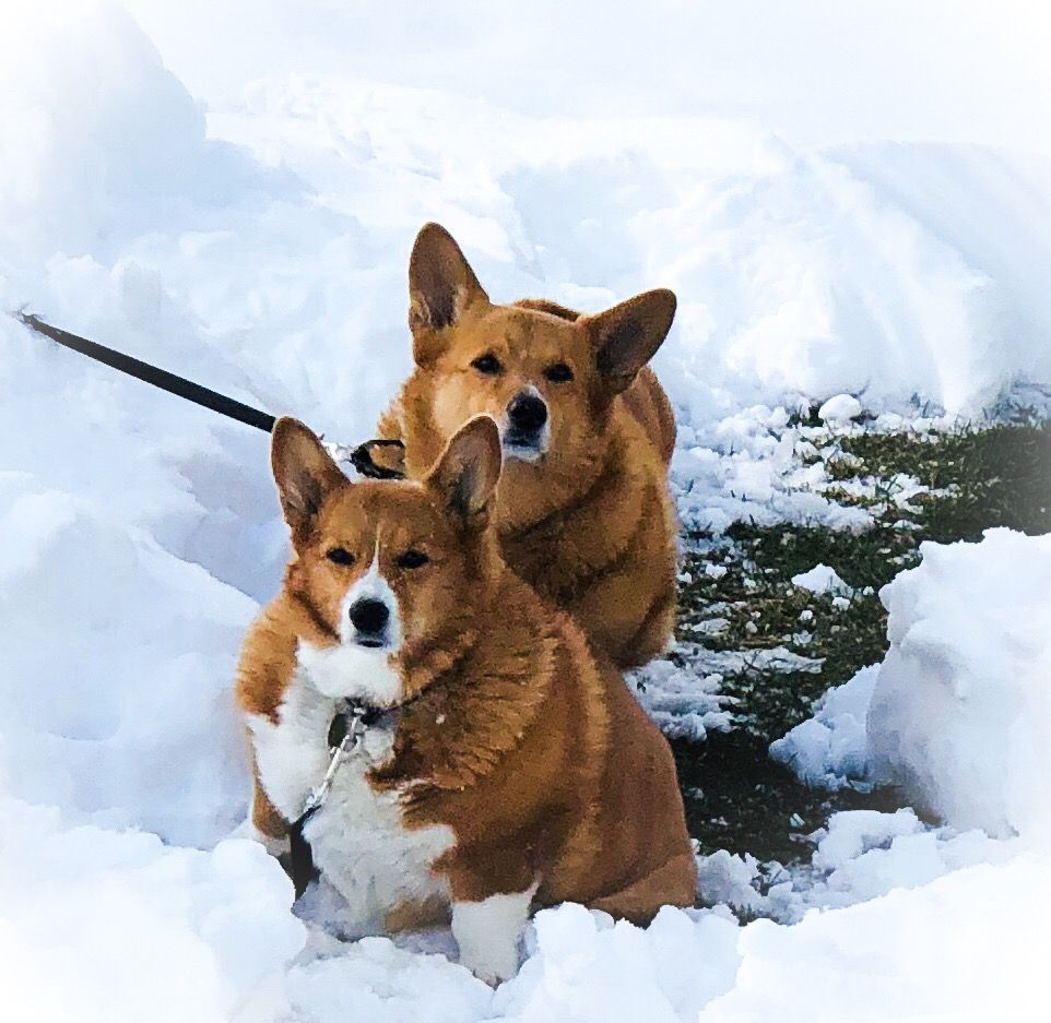 Chuck Crawford Was Expecting A Call To Say His Corgi S Grooming Was Done Instead Petsmart Told Him Abby Was Dead And Gave H Beloved Dog Petsmart Dog Poor Dog