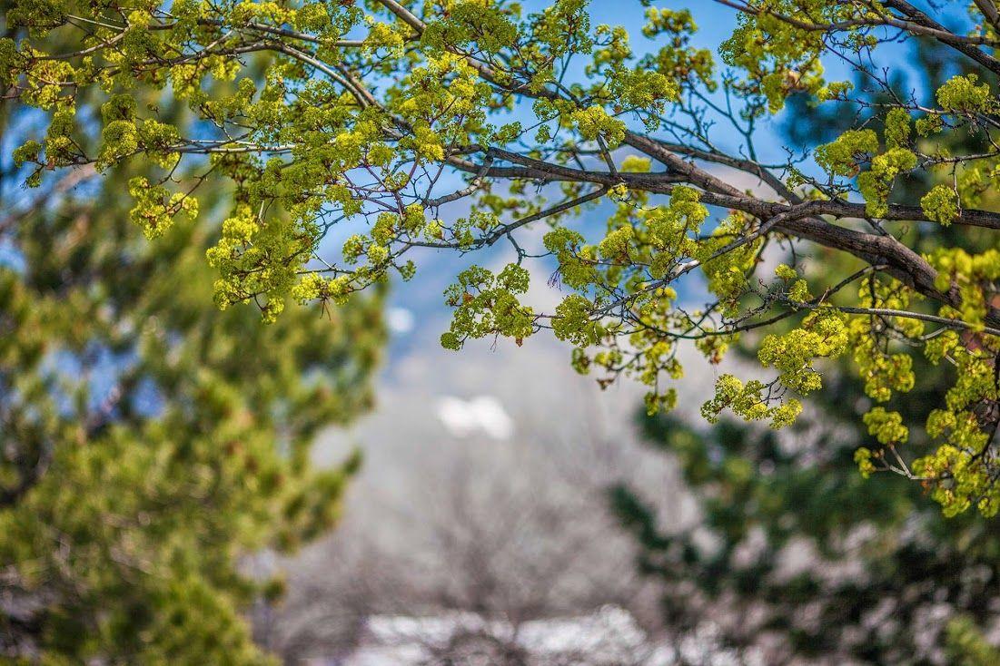 Spring In Missoula Montana Missoula Montana Four Seasons