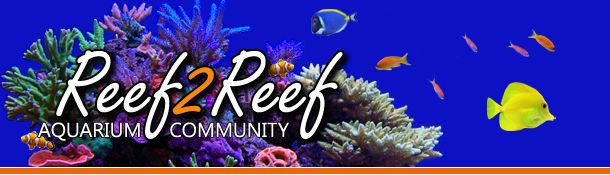 Good place to be educated. | Saltwater aquarium, Home ...