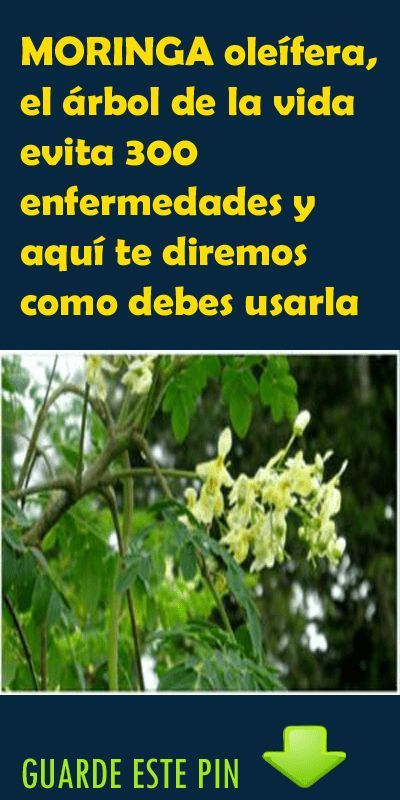 moringa oleifera gezond