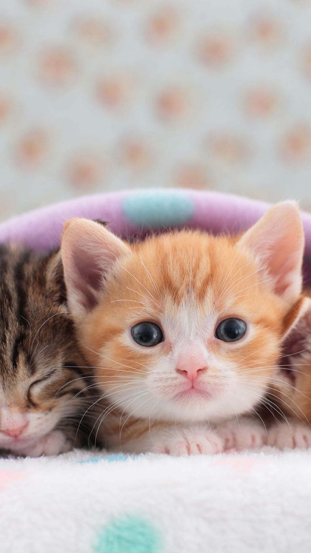 Kitten Cat Background Image In 2020 Cat Background Cats And Kittens Cats