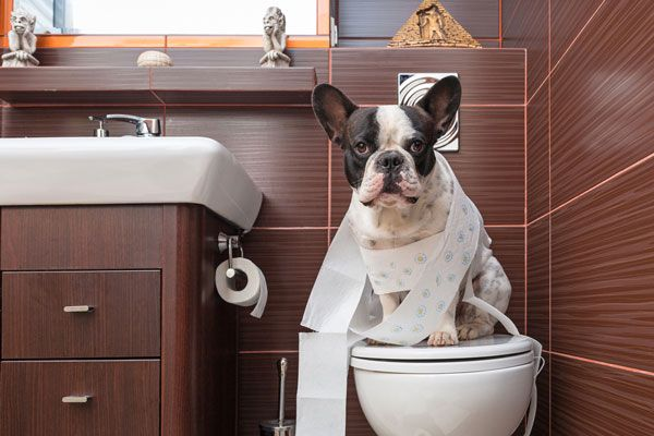 How To Potty Train A Dog With Images Dog Potty Dog Potty