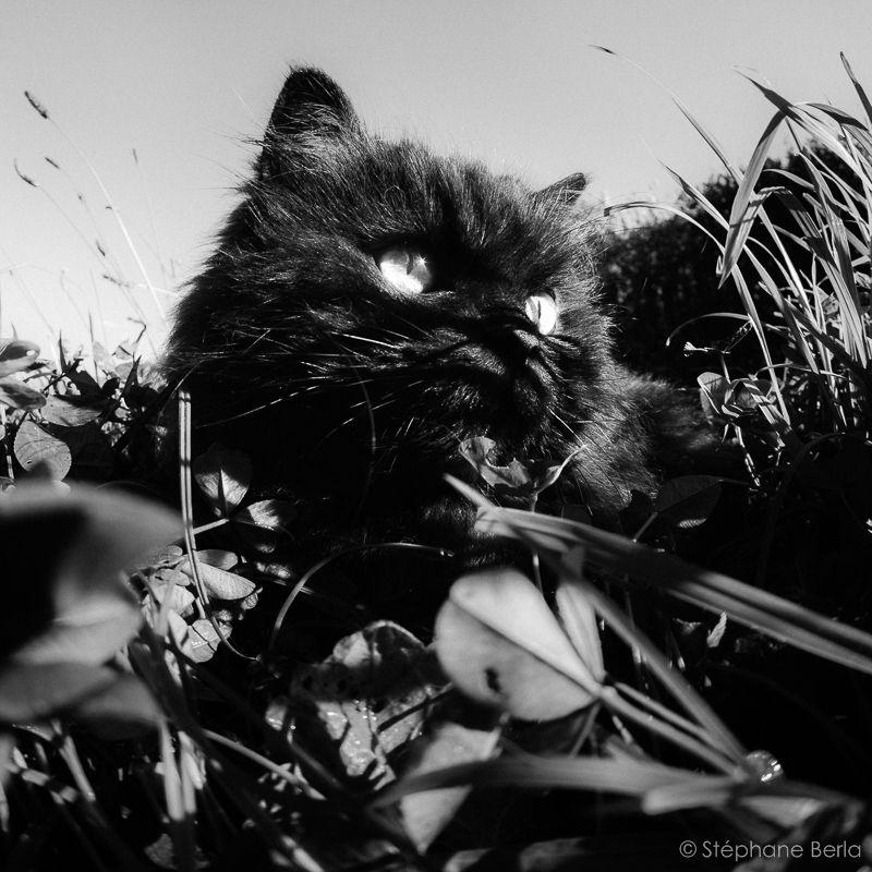 Tags: cameroon beurette blackette pote baise cameroun baise french black amateur frere et soeur grosse chatte black une jouis african rohini dutta jacquie et.