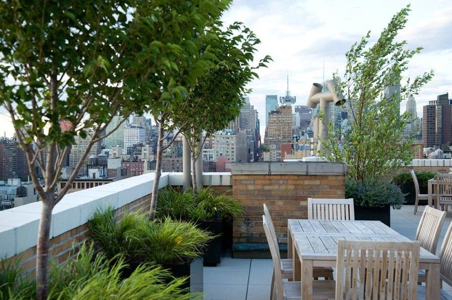 Roof Terrace Trees Amp Low Maintenance Grasses For Privacy