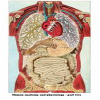 Human Anatomy and Physiology - part two - http://www.flashgameus.com/human-anatomy-and-physiology-part-two/