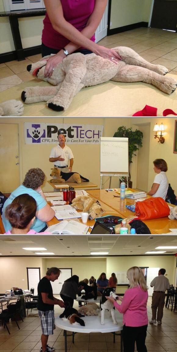 PET TECH Pet First Aid & Cpr Pets first, Pets, First aid